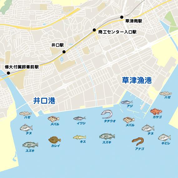 草津漁港周辺 メバル 陸っぱり ...