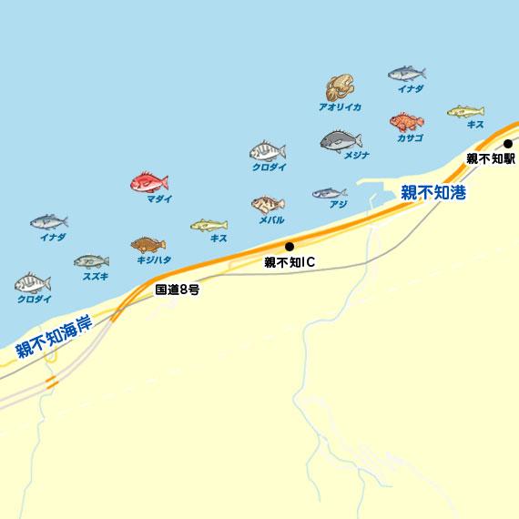 親不知港周辺 陸っぱり 釣り・魚釣り | 釣果情報サイト カンパリ