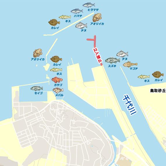 釣り 鳥取 イカ