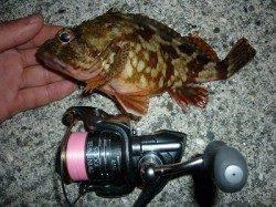 【田ノ浦】夜のガシラ釣りが面白い~♪