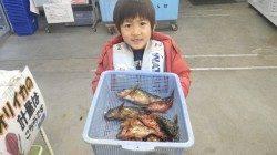 堺漁港でブラクリでガシラ10匹GETで少年にっこり♪
