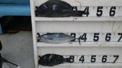 伊古木のセンズでフカセ釣り、グレ&ヤイト
