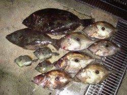 【串本カセ】今が旬の高級魚を釣りに行きませんか
