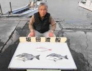 衣奈の筏 マダイ&チヌ釣果