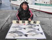 黒島の筏チヌ、年なし含むグッドサイズ5枚♪♪