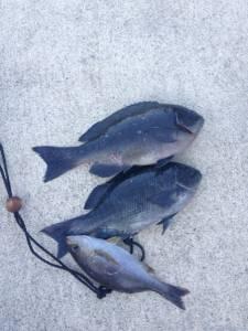 もちろんカゴ釣りも好釣ですヨ