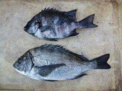 良型チヌにサンバソウ〜ケムリ島でのフカセ釣り〜
