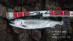 幻の魚、サクラマス【大伴渓児氏連載記事No.12】