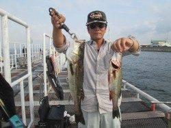 尼崎市魚つり公園 サッパ・イワシの他ハネも