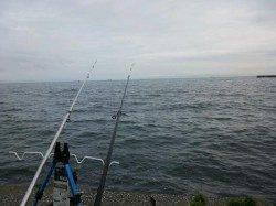 深日漁港 投げ釣りでキス16尾 最大22cmの納得サイズも