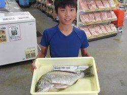 キッズ釣り師、紀州釣りでヘダイ48.5cm★