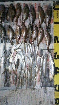 洲本にてちょい投げキス&ズボ釣りでメバル・ガシラ&サビキ釣り