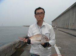和歌山北港魚つり公園 ハマチとマダイの釣果もありました