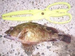 淡路島・仮屋でのアナゴ釣り〜今季初めて満足のいく釣果でした♪
