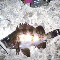 大蔵海岸メバリング、22〜23時の釣行