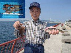 平磯海づり公園 投げ釣りでベラ・ガシラの釣果
