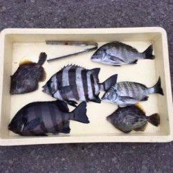 マリーナシティ海釣り公園 紀州釣りでイシダイ・カワハギ・チヌ