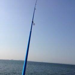 樽井にて引き釣り〜アベレージサイズのキス釣れました