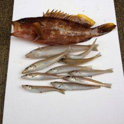 香住東港 遠投の投げ釣りでアコウ&キス