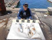 黒島の磯 ヤエンでのアオリイカ釣果