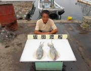 黒島の磯でヤエン釣り アオリイカ、キロUPも釣れています