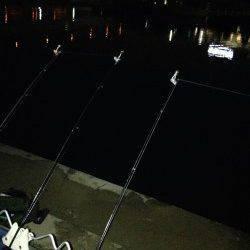 武庫川河口にウナギ狙いで釣行〜大きなマチヌが釣れました