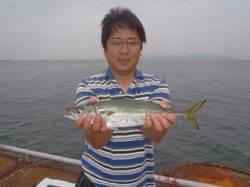 須磨海づり公園 良型のサバがウキサビキで釣れました