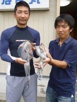 湯浅の磯 ヤエンでアオリイカの釣果