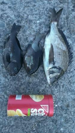 南芦屋浜にてウキ釣りでチヌ・グレの釣果