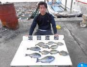 黒島の磯のフカセ釣果、グレのほかカワハギも