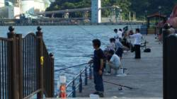 サビキで賑わう親海公園にてウキ釣りでチヌ52cm