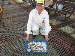 尼崎市立魚つり公園 毎日安定したサビキ釣果でてます