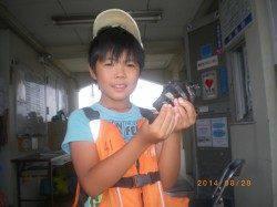 サビキでサンバソウ釣れました 姫路市立遊漁センター