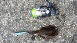 唐尾漁港にてエギング〜アオリイカ新子が釣れました