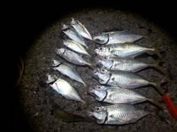 堺漁港でアジ入れ食い☆朝まで釣れました