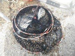 紀州釣りでチヌ・グレ・アイゴ・カワハギ 和歌山北港魚つり公園