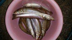 戎漁港でキス釣り。久しぶりにナイスサイズゲット(^_^)v