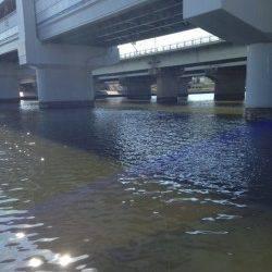 武庫川にて脈釣り ハゼの魚影の濃さを実感
