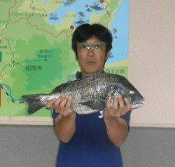 久美浜カセでチヌ53.2cmの釣果! エサは丸貝でした
