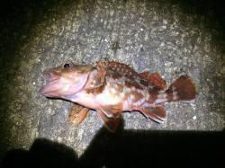 雑賀崎へ夜釣りに行ってきました テンヤでタチウオ・ズボ釣りでガシラ