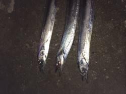 北港へタチウオテンヤ釣りに カウント5〜6くらいでアタリ
