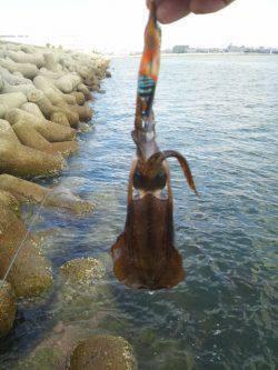 東二見人工島エギング お昼休みの短時間釣行でアオリイカ新子