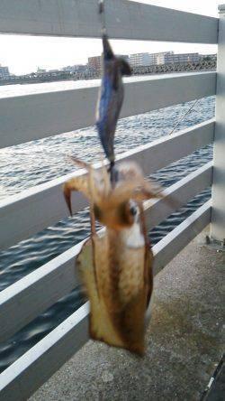 新浜漁港 エギングでアオリイカ サイズUPでこれからが楽しみ!