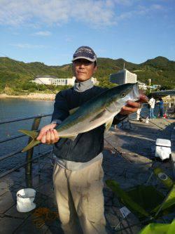 淡路島・翼港 ノマセ釣りでメジロ!中々の引きを楽しめました