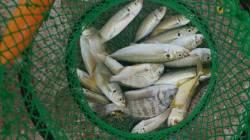 みなべでカゴ釣り 夕方アジ・チヌ、干潮30分前にシマアジ