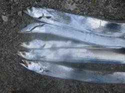 喰わせの間を作ることがヒットに繋がりました 貝塚人工島タチウオワインド