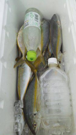 すさみ 遠投カゴ釣りで小型のシマアジ