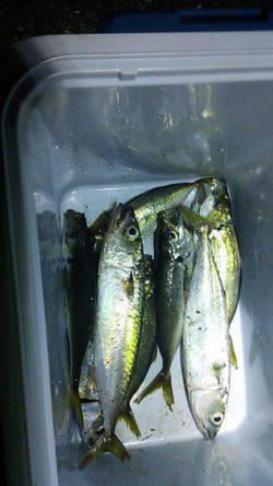 大阪南港 アジング釣行でショートバイト多発