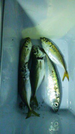 大阪南港 タチウオのバイトはなくアジングでアジ・サバ