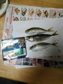 大阪南港 短時間のアジング釣行でアジ数匹の釣果